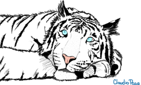 sketch 4937 Favorite animal competition runner-up: White Tiger by Deepak Kaushik