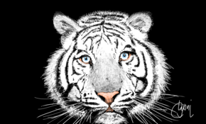 sketch 4883 White tiger by Kayson Danielle