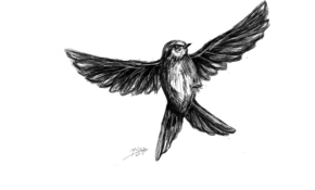 sketch #4953 Bird by Ervin Haxhija
